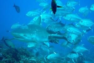 エピソード4:魚類