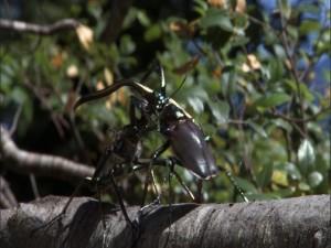エピソード6:昆虫