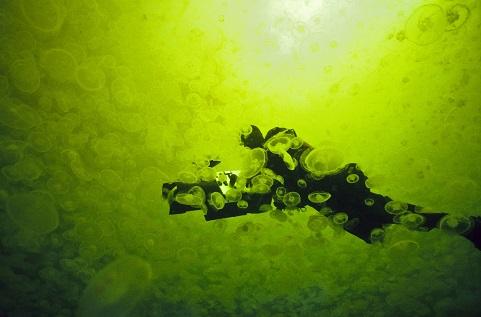 エピソード8:深海生物