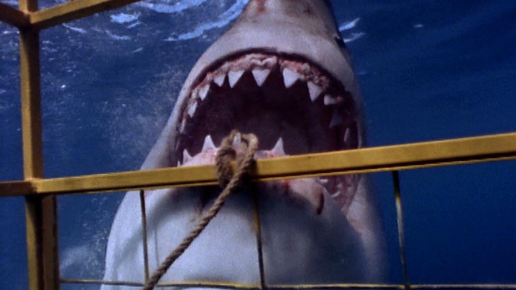 もしもの時の生存マニュアル サメに襲われたら